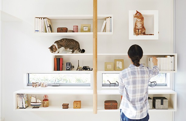 Fun For Crazy Cat People: Design an Awesome Home for Your Master Cats